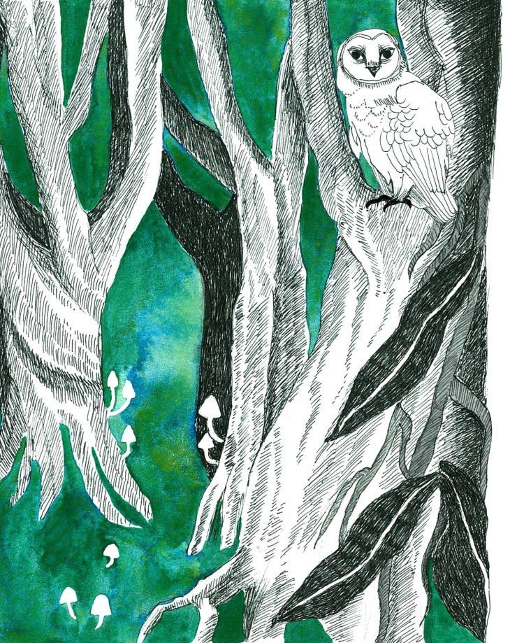 'The Woods' from 'Finders Keepers' Illustration by Sophie Gainsley