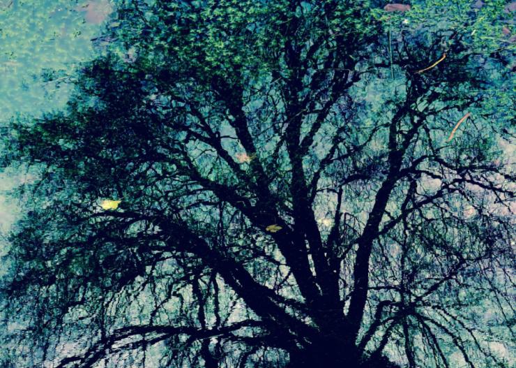 Philippa-Manuel-Soapbox-Press-Interview-Photography-Tree
