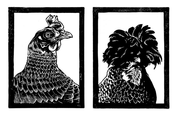 Matt-Burne-Soapbox-Press-Interview-Illustration-Chickens
