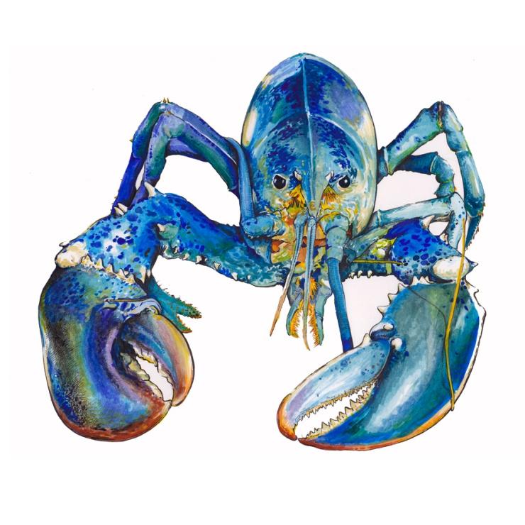 Matt-Burne-Soapbox-Press-Interview-Illustration-Lobster